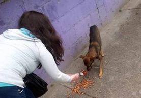 Una voluntaria alimenta un perro durante una de las actividades pasadas que impulsado Zomm Fashion Pets. (Foto Prensa Libre: Cortesía).