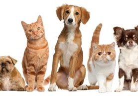 Las mascotas permiten a las personas mejorar su calidad de vida. (Foto Prensa Libre: HemerotecaPL)