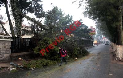 Árbol que   cayó por las lluvias rompió cables de alta tensión que suministran energía eléctrica en la zona 3 de Quetzaltenango. (Foto Prensa Libre: Carlos Ventura)