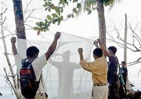 Personal de Salud toma muestras de sangre a pobladores de Punta de Manabique, Puerto Barrios.