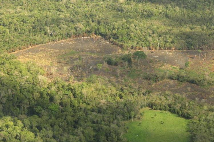 Tala ilegal en interior del parque nacional Laguna del Tigre, San Andrés, Petén. (Foto Prensa Libre: Rigoberto Escobar)