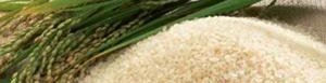 Producción de arroz se reduciría.