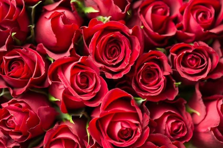 Las rosas del día del cariño merecen, también, un poco de cariño (Foto Prensa Libre: servicios).