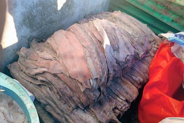 Autoridades decomisaron al menos mil libras de carne de pez vela en Puerto San José, Escuintla.