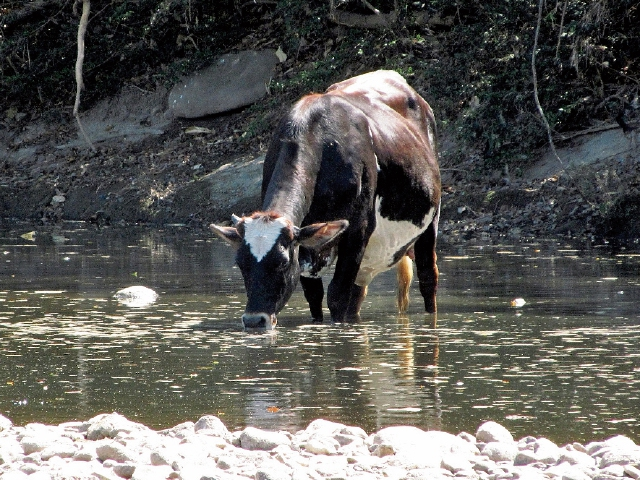 Autoridades buscan ayudar a minimizar la contaminación del agua. (Foto Prensa Libre: Archivo)