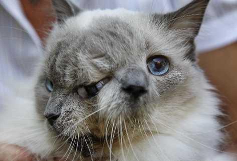 Gato que nació con dos caras establece record al vivir 12 años.(AP)
