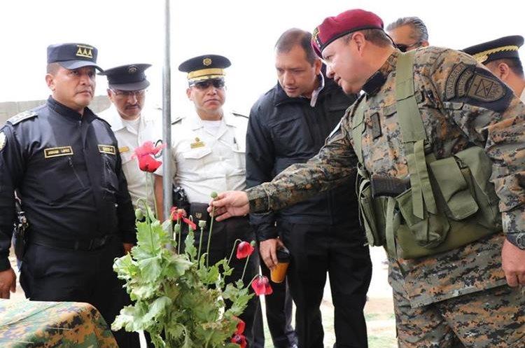 El Ministro de Gobernación, Francisco Rivas, (segundo de derecha a izquierda) observa una de las plantas de amapola que fue cortada en la región. (Foto Prensa Libre: Whitmer Barrera)
