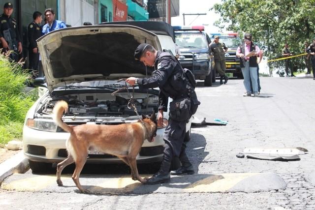 Los agentes K9 de la PNC contribuyen con la incautación de grandes cantidades de droga, dinero y explosivos. (Foto Hemeroteca PL)