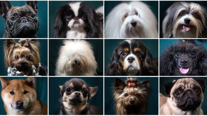 Peludos, pelados, blancos, negros, lisos o manchados... los hay para todos los gustos. (Foto Prensa Libre: Getty Images)