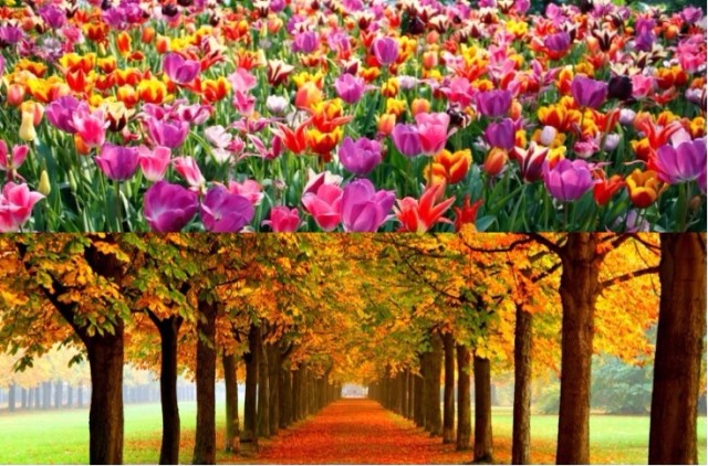 Del 22 al 23 de septiembre se celebra oficialmente la llegada de la primavera en el Hemisferio Sur y el otoño en el Hemisferio Norte. (Foto Prensa Libre: Hemeroteca PL)