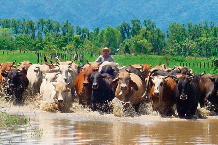 Impulso al sector ganadero del pa s for Ministerio de ganaderia