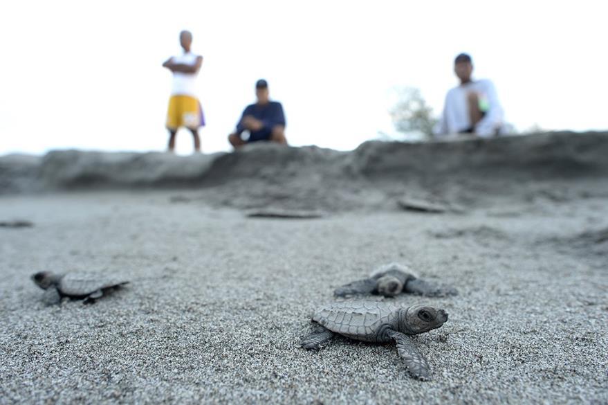 La principal causa de la extinción de las tortugas es la actividad humana.  (Foto Prensa Libre: AFP).