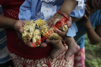 Pobladores de Chiquimula perdieron  sus cosechas  debido a la  falta de lluvia y el intenso  calor que provocó el fenómeno del Niño en octubre del año pasado. (Foto Prensa libre: Edwin Bercián)
