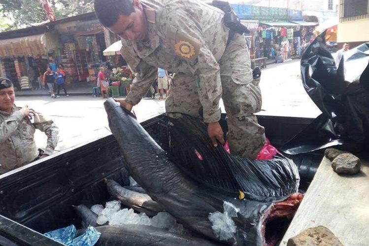Los peces atrapados por los pescadores furtivos fueron trasladados al juzgado de turno de Escuintla para mostrarlos como prueba. (Foto Prensa Libre: Enrique Paredes)