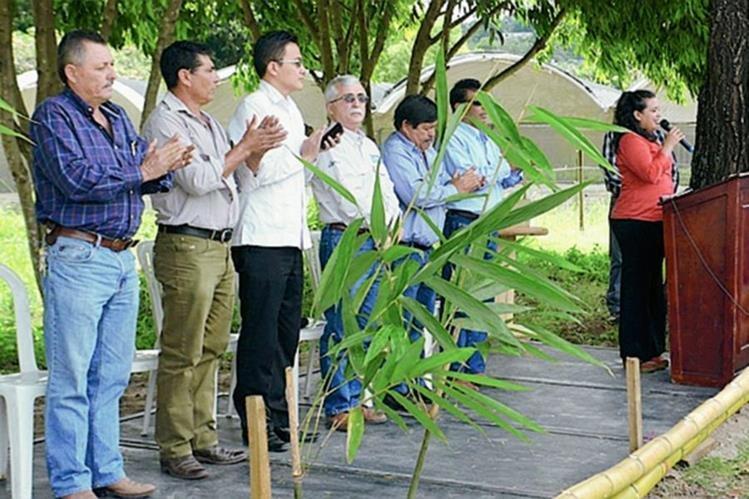La siembra de bambú generará materia prima para la construcción de viviendas, muebles o artesanías. (Foto Prensa Libre: Cortesía Maga)