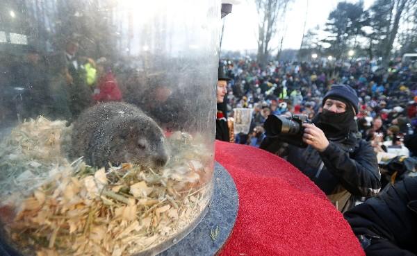 """Un fotográfo saca una foto de la marmota """"Phil"""", el animal meteorólogo más famoso del mundo. (EFE)."""