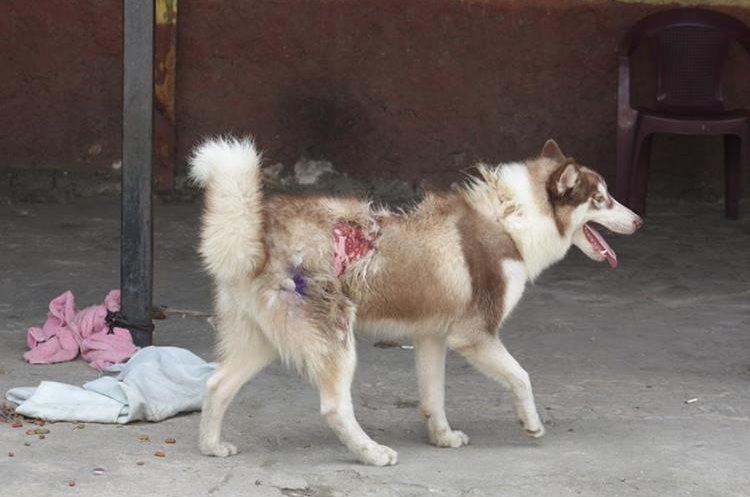 Locky luego de ser rescatado en una vivienda de la zona 5 capitalina. (Foto Prensa Libre: Unidad de Bienestar Animal del Maga).
