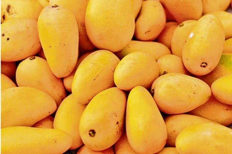Productores de mango optarán por la industrialización del fruto para añadirle valor agregado a las exportaciones.
