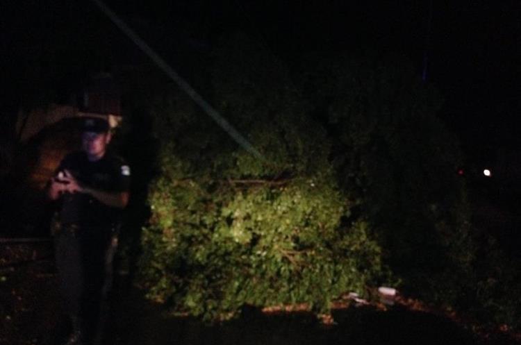 Árboles derribados en Petén. Foto Prensa Libre: Conred.