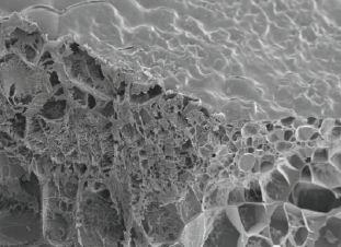 Estructura química de hidrogel, utilizado en el estudio. (Foto tomada de Nature)