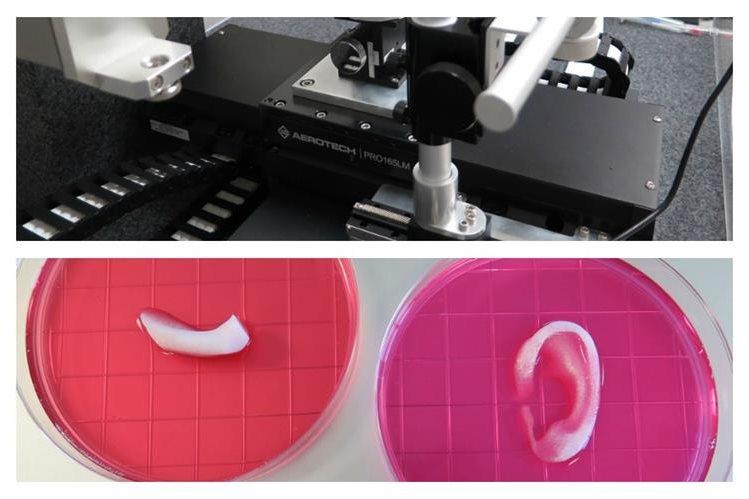 Científicos en Estados Unidos han implantado con éxito en animales estructuras de tejido vivo fabricadas con una impresora 3D. (Foto Prensa Libre: Wake Forest Baptist Medical Center)