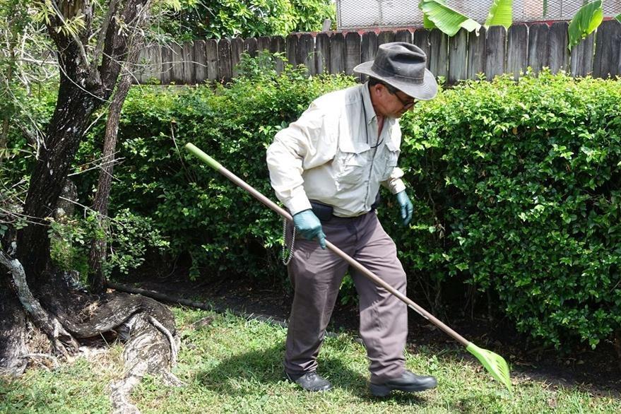 Florida lucha contra la invasi n de los caracoles gigantes for Caracoles en el jardin