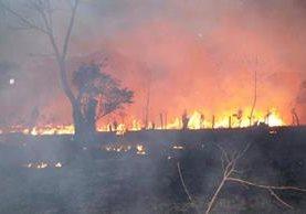 El fuego destruye los bosques de Petén. (Foto Prensa Libre: Rigoberto Escobar)