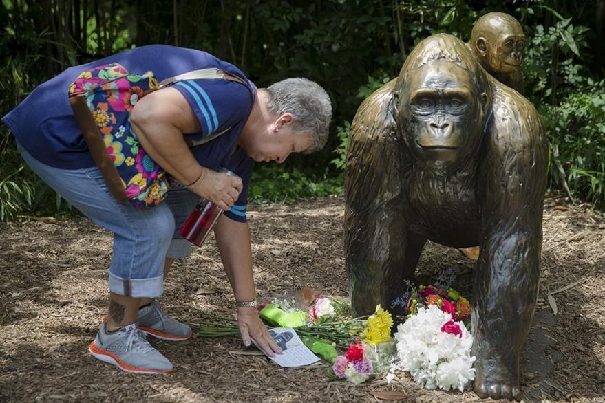 Una mujer deposita una ofrenda floral junto a una estatua en recuerdo del gorila Harambe. (Foto Prensa Libre: AP).