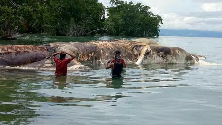 Pobladores de Indonesia se sorprendieron la semana última al localizar un extraño animal en un río. (Foto Prensa Libre: Facebook Mbs Sangadji)