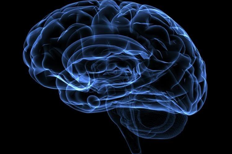 El cerebro y sus conexiones también tienen que estar en forma para prevenir problemas (Foto Prensa Libre: owaishihospital.com).