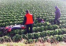 El cuerpo de Miculax quedó entre un sembradillo de lechuga. (Foto Prensa Libre: Víctor Chamalé)