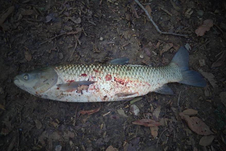 El cambio climático está obligando a los peces a abandonar sus hábitats tradicionales para buscar aguas más frías. (Foto Hemeroteca PL).