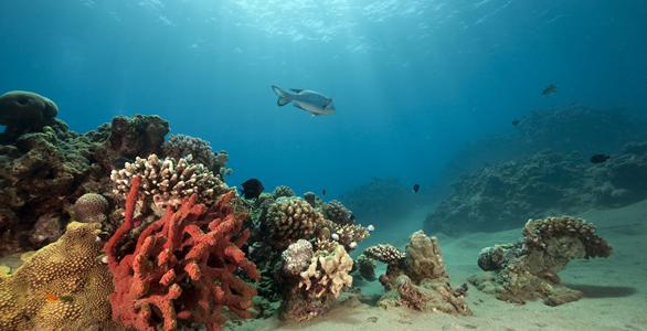 <em>El Acuario de Florida enviará una delegación en noviembre a La Habana para participar en una conferencia sobre ciencia marina. (Foto Prensa Libre: knowaboutcuba.com).</em>