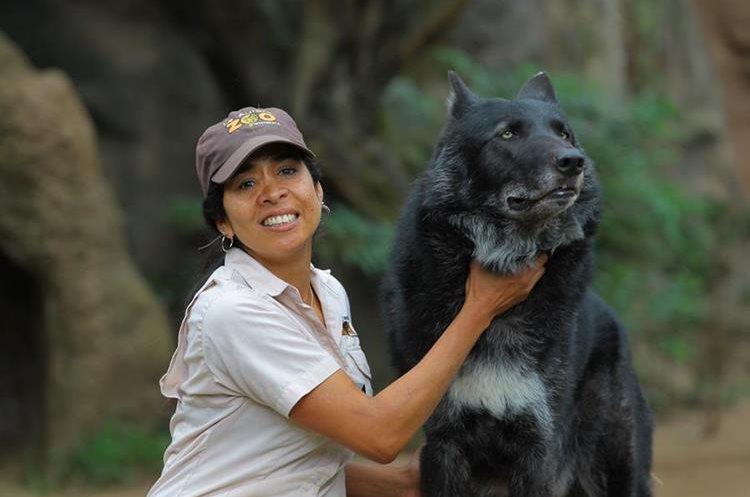 Lourdes Fernández junto a Hansel, uno de los lobos grises que cuida