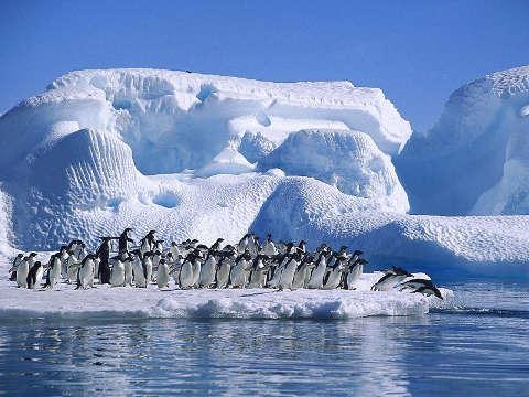 El daño en los ecosistemas en el Ártico podría en riesgo especies animales como los pingüinos. (Foto Prensa Libre: Internet).