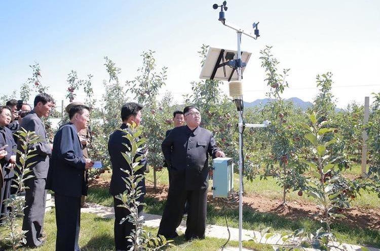 Kim Jong-Un visitó una granja de frutas en el condado de Kwail-p, en la provincia de Hwanghae del Sur.(AFP).