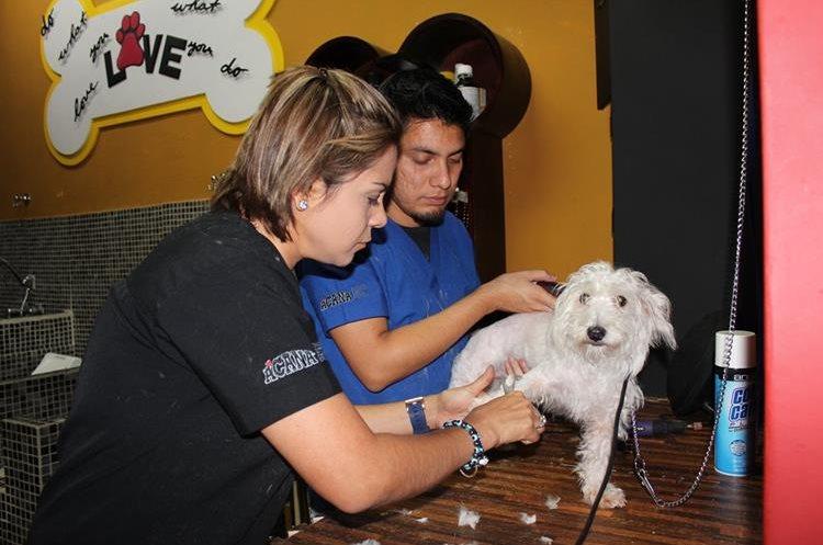 Love Grooming se dedica a consentir a las mascotas (Foto Prensa Libre: Sandra Vi)