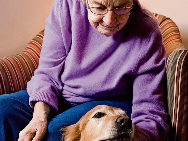 Para un  adulto mayor se recomienda un perro de carácter tranquilo y obediente, pues así la convivencia será más armónica entre amo y mascota.