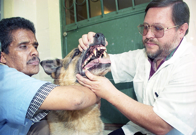 El veterinario Claudio Bobadilla explicó que Baloo padecía varias dolencias y que no era agresivo. (Foto: Hemeroteca PL)