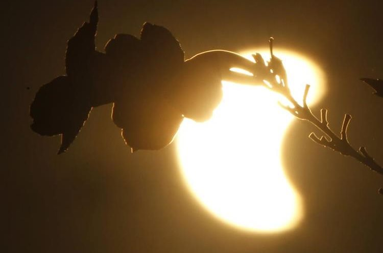 The moon is obscuring part of the sun over flowers during a solar eclipse in Phnom Penh, Cambodia, Wednesday, March 9, 2016. (AP Photo/Heng Sinith)