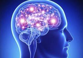 El cerebro creado en laboratorio es similar al de un feto de cinco semanas, y contiene todas sus estructuras.