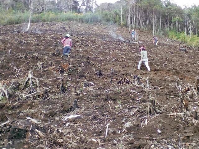 Cooperativa Integral de Servicios Especiales Jóvenes Emprededores RL, se dedican a cultivos orgánicos. (foto Prensa Libre: Cortesía)