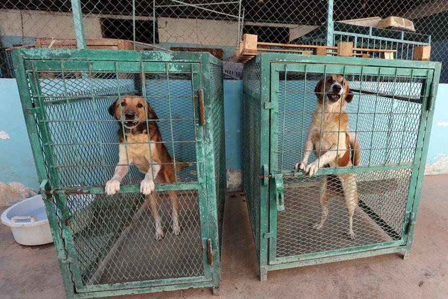 El veterinario afirma haber recorrido distintos barrios de la capital en busca de estos animales, pese a que los combates arreciaban. (Foto Prensa Libre: AFP).