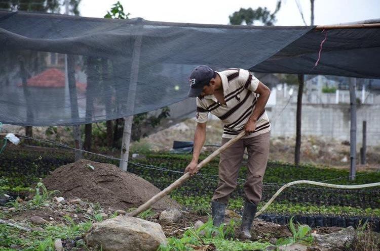 Un hombre labora en un huerto familiar que organizaciones impulsan en la región. (Foto Prensa Libre: Mario Morales)