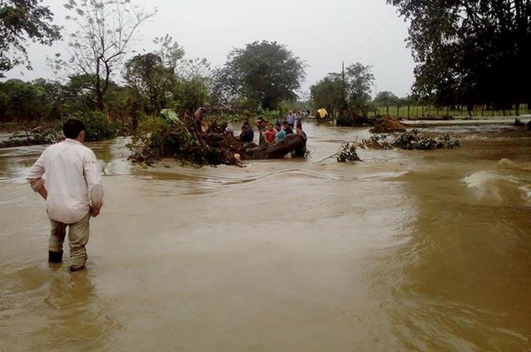 Vecinos de Champas Corrientes y Cacao Frontera, Puerto Barrios, Izabal, retiran árboles arrastrados por inundaciones. (Foto Prensa Libre: Dony Stewart)