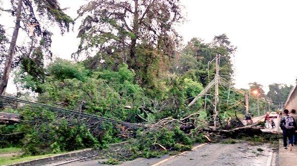 Árboles caídos en zona 16. (Foto Prensa Libre: Amílcar Montejo)