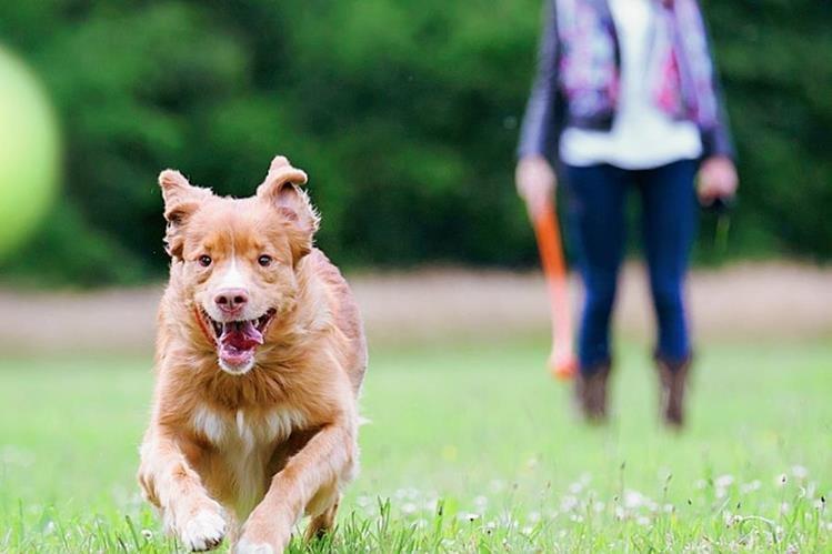 Es importante que el perro y su amo compartan momentos de ejercicio y juego (Foto Prensa libre: Hemeroteca PL).