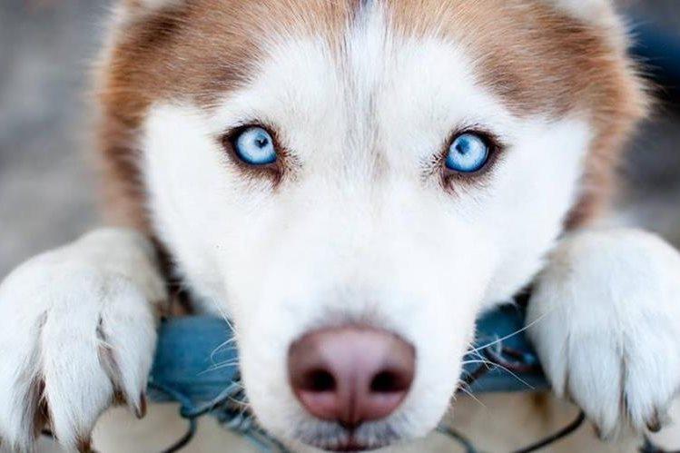 El perro, ese amigo inseparable del hombre, es admirado y querido en muchas partes del mundo. (Foto: Hemeroteca PL).
