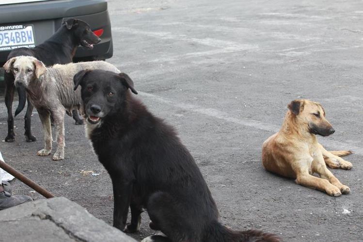 Perros callejeros captados en la ciudad. (Foto Prensa Libre: Hemeroteca PL)