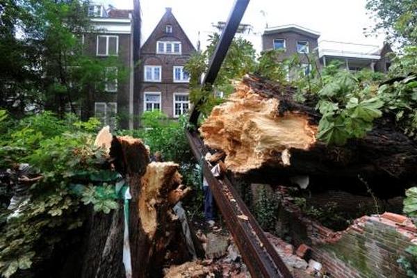 <p>Árbol que reconfortó a Anna Frank y descrito en su diario cayó por el viento, en Ámsterdam.</p>